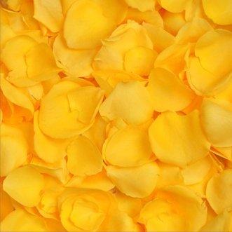 Желтые лепестки роз