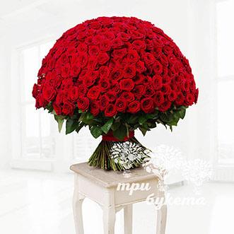 Букет из 301 красной розы