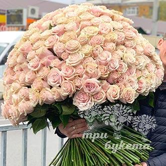 Букет из 301 кремовой розы